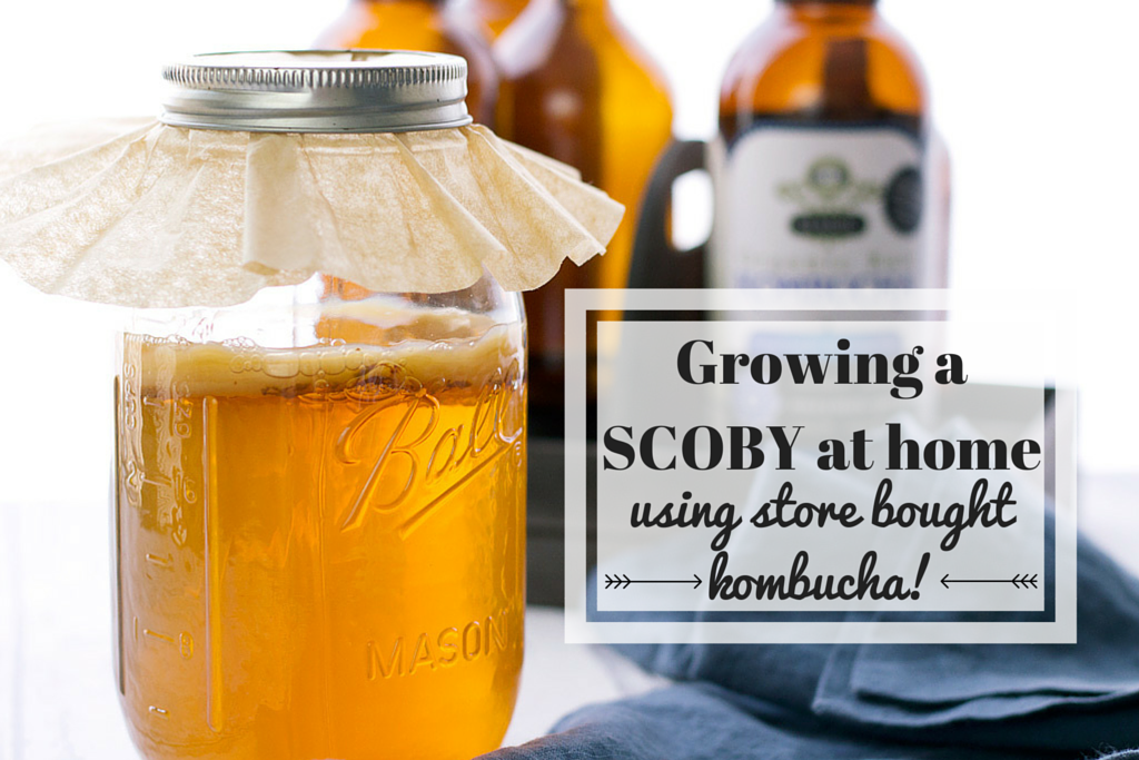 Growing a scoby at home using store bought kombucha
