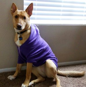 athena puppy in american apparel hoodie