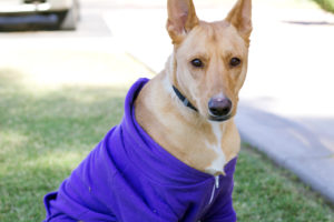 athena looking sassy in her american apparel dog hoodie