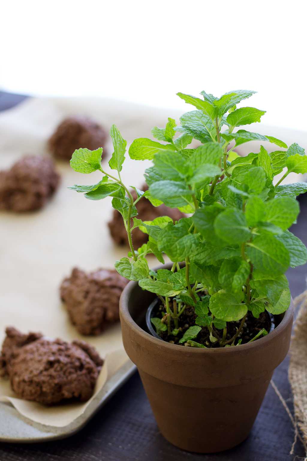 Organic mint plant in front of chocolate mint scones