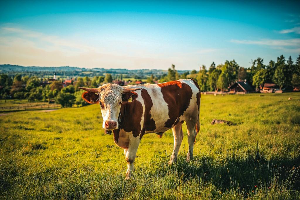 8 reasons to never go vegan