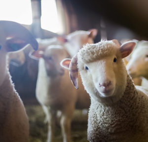 Natural vegan products animal sanctuary